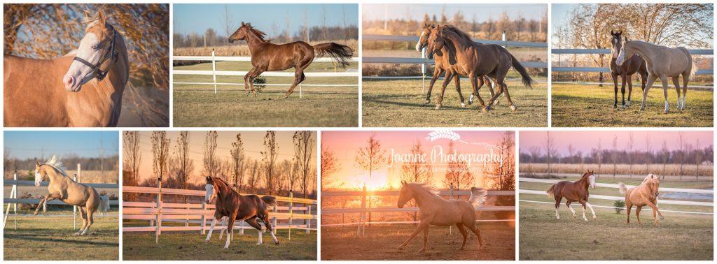 Quarter Horse Photos